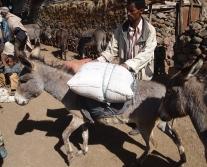 donkey full of goods