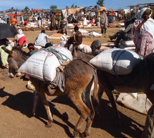 donkeys carry goods to market