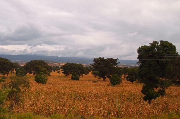 landscape on the way to Lake Langano