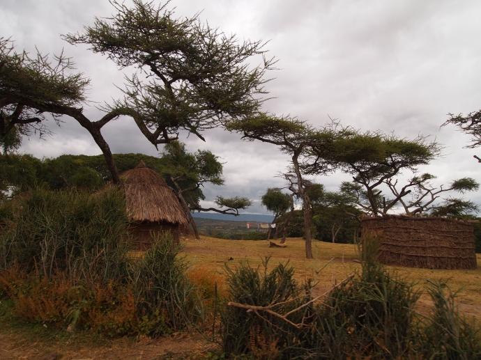acacia trees & tukuls
