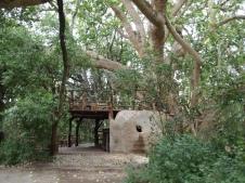 the Tree House bar