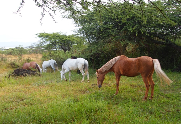 wild horses graze near the dining area
