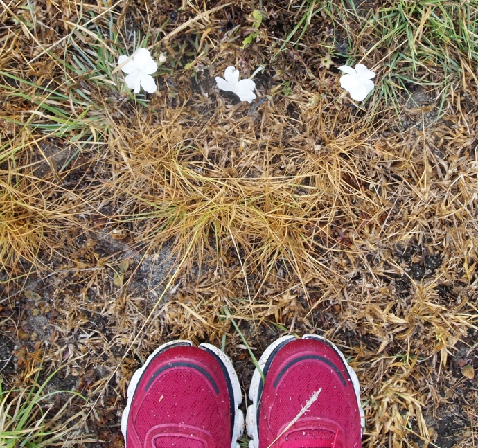 red shoes & wildflowers