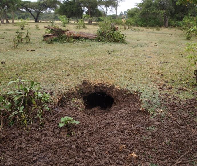 an aardvark hole