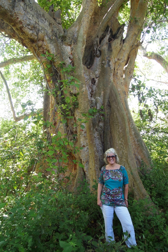 me in front of a huge ficus tree