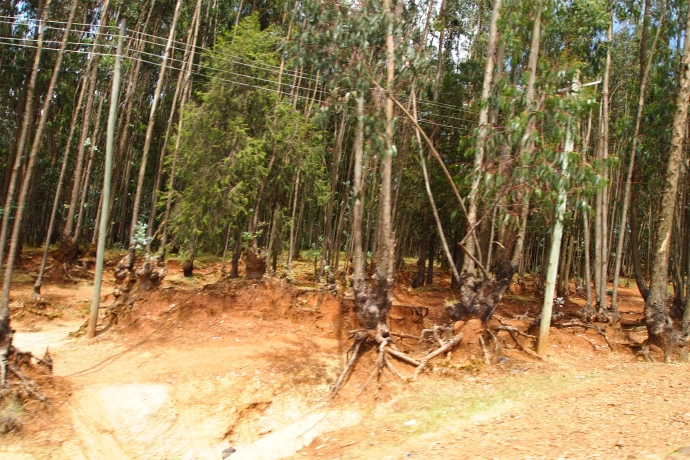 Forests stripped bare for survival