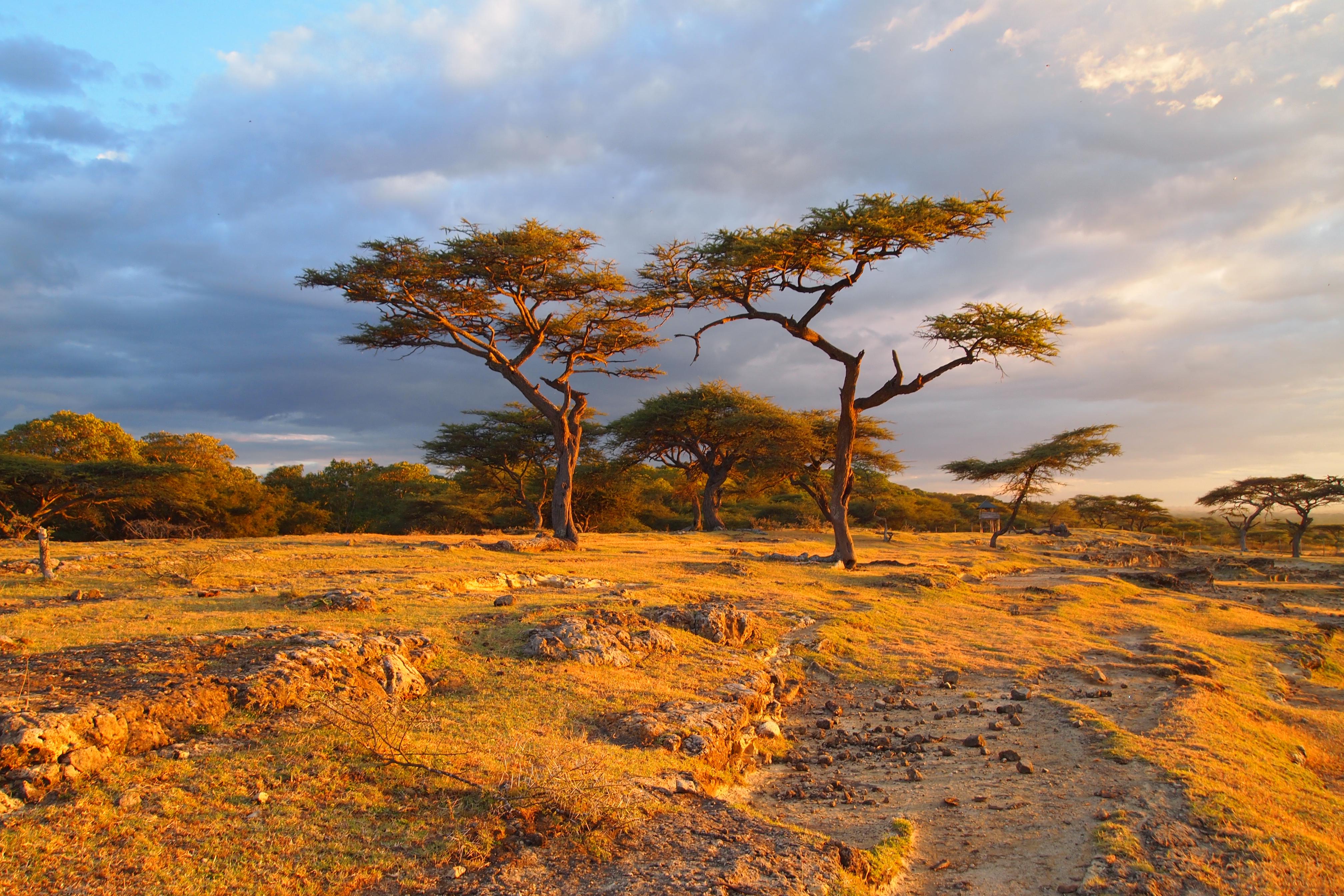 Bishangari lodge african meanderings musings for Landscape sa