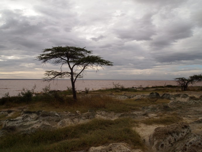 pumice under the clouds and an acacia tree
